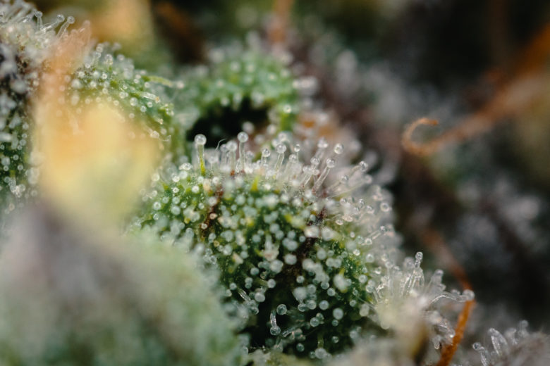 QWEST Cannabis Ice Cream Cake Macro Photography by Craig Barker