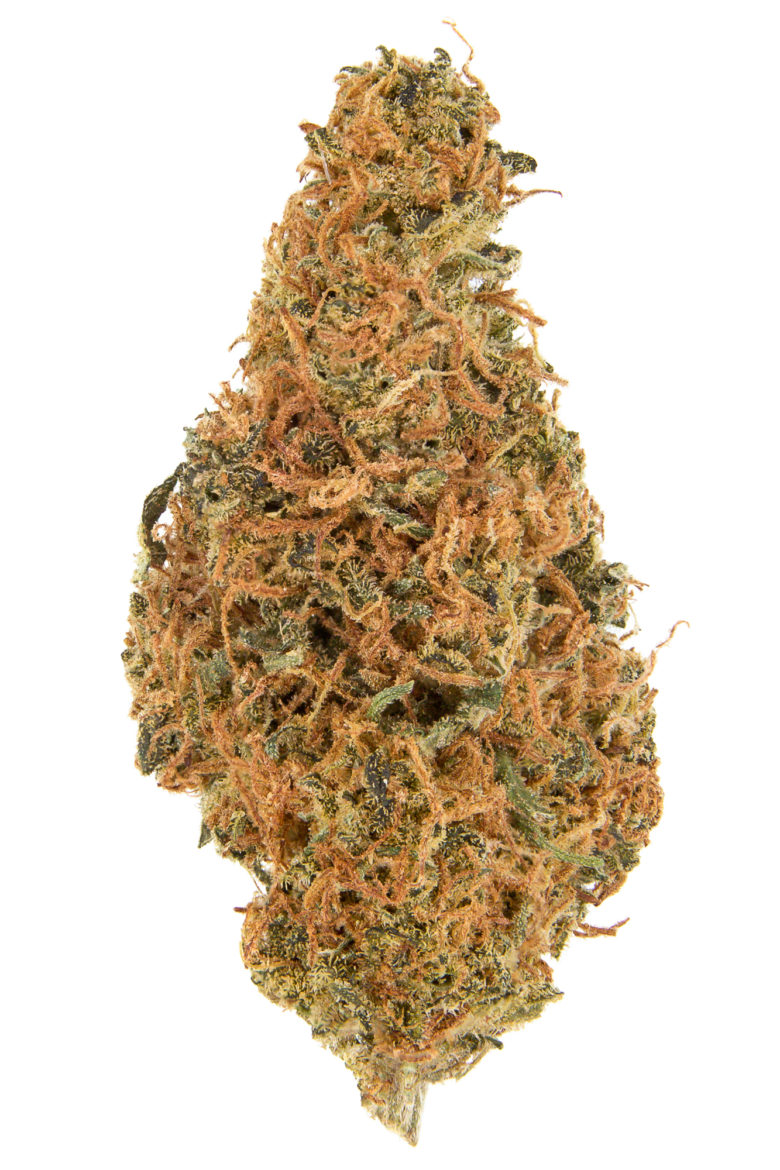 Grapefruit Dried Flower Grown by WMMC