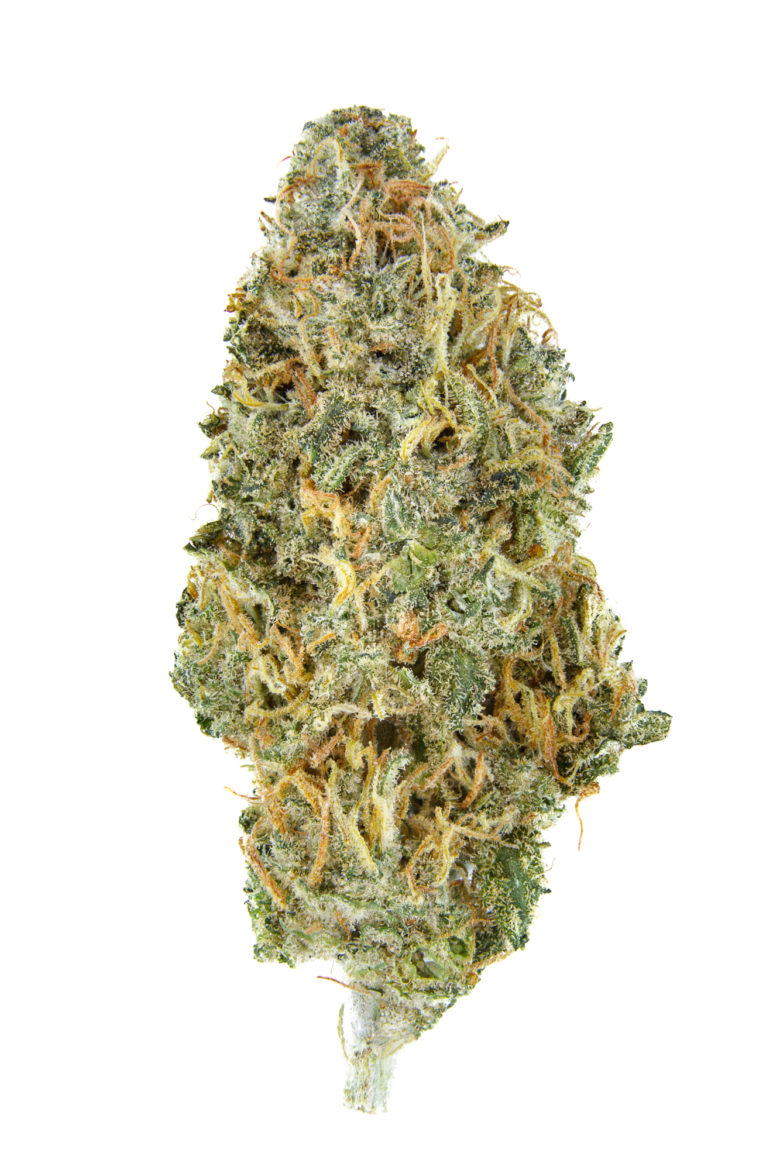 CBD Shark Dried Cannabis Flower Grown by WMMC